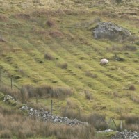 Traditional Irish Fields, Slainte Ireland Tours